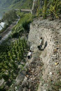 Clemensbusch vigne 1