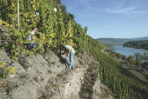 Clemensbusch vigne